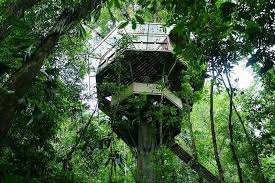 I Have Built A Treehouse - this couple built a real life ewok village in costa rica