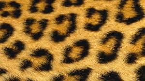 leopard print wallpapers hd pixelstalk net