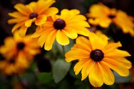 autumn flowers file autumn flowers 10376232316 jpg wikimedia commons