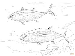 yellowfin tuna coloring page free printable coloring pages