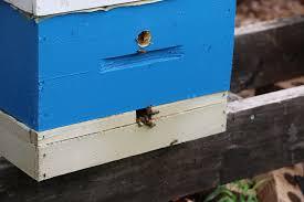 top entrance bee hives keeping backyard bees