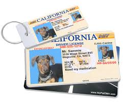 mypetdmv official pet driver u0027s license tag for all 50 states