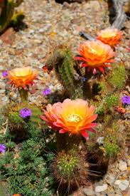 Arizona travel loans images Best 25 arizona cactus ideas desert cactus desert jpg