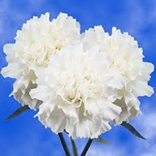 wholesale carnations globalrose 200 fresh cut white carnations fresh