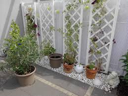 pflanzen f r balkon winterharte pflanzen fr den balkon interesting winterharte