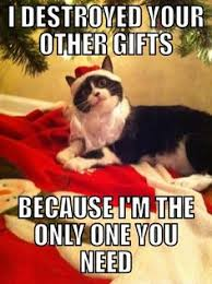 Christmas Day Meme - sunday cats in hats serenity is a fuzzy belly