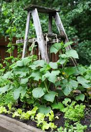 Backyard Bites 109 Best The Garden Images On Pinterest Gardening Garden And Plants