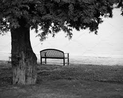Bench Photography Lonely Park Bench In Black And White Nature Photos Creative Market