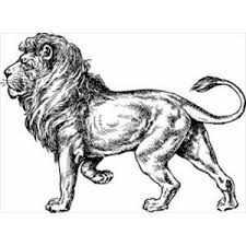 really nice full body sketch of a lion cute pinterest