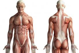 Human Anatomy Careers 8 Medical Illustrator Medical Illustrator 10 Fun Careers In