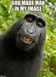 Funny Monkey Meme - funny monkey memes imgflip