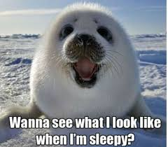 Meme Sleepy - wanna see what i look like when i m sleepy weknowmemes