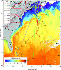 Shark Map Of The World by Tracking Sharks In The Space Age The Fisheries Blog
