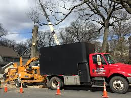 tree equipment joe marra tree service