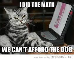 Cat Laptop Meme - pc cat meme cat best of the funny meme