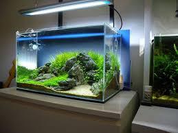 Aga Aquascaping Contest 25 Parasta Ideaa Pinterestissä 120l Aquarium Planted Aquarium