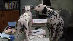 image 102 dalmatians disneyscreencaps 2551 jpg disney wiki