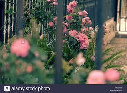 beautiful fence of a home at dalat vietnam climbing roses