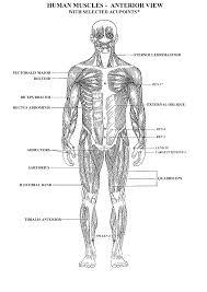human body muscle diagram worksheet u2013 defenderauto info