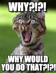 Meme Why - why screaming cat meme on memegen