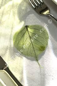 Ambiance Et Deco 114 Best Deco De Table Vert Blanc Images On Pinterest Twitter