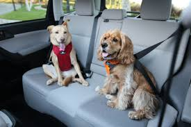 lexus for sale in tucson the 10 best cars for dogs autobytel com