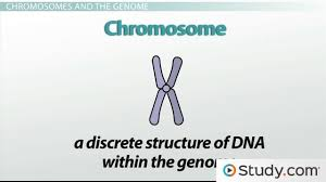 genetics heredity traits u0026 chromosomes video u0026 lesson