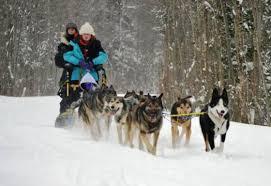 dog sledding cranmore mountain lodge bed u0026 breakfast