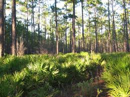 Florida Vegetaion images Florida forest jpg