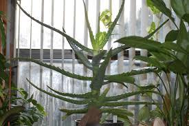 plant care willowbatel u0027s blog