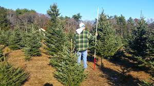 holiday bucket list cut down your own christmas tree blogs