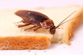 cockroaches prompt restaurant closure in milwaukee my cleaning