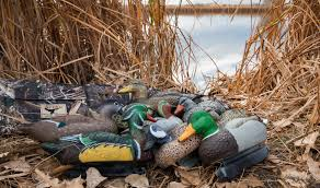 Mallards Duck Blind Where To Place Your Duck Decoys Hunting Tips And Tactics