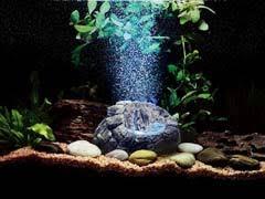 aquarium ornaments 7 tips how to decorate your aquarium