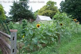 dear friend and gardener june vegetable garden update the 20 30
