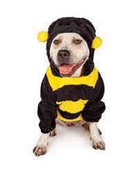 Bull Halloween Costume Pit Bull Halloween Bumble Bee Costume Olsen U0027s