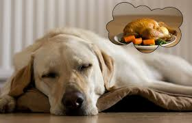 thanksgiving dog dogs dream about their owners says scientist cambly u0027s curated