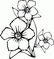 flower drawings to color coloring pages draw easy flowers imgimg