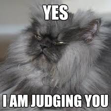 Colonel Meow Memes - 80 best colonel meow images on pinterest cats kittens and cat