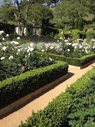 white roses and box hedge for outside pinterest white roses