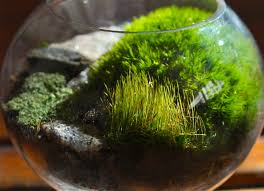 16 best moss images on pinterest moss garden nature and plants