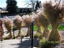 jeffco gardener cutting and disposal of ornamental