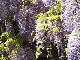 Free Images Blossom Flower Purple Herb Botany Garden Flora