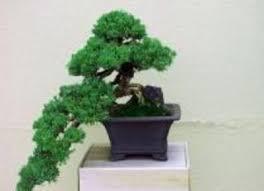 miniature trees home