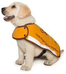 How Do Blind Dogs Know Where To Go Stages Of Guide Dog Training Guide Dogs Wa