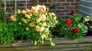 Flower Area - littlestown area garden club home facebook