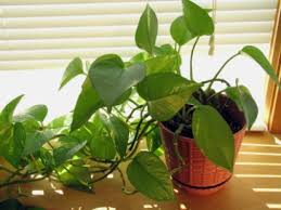 easy flowers to grow indoors indoor flowers and foliage growing plants indoors by troy bilt