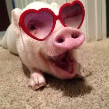 hogs and kisses rebrn com
