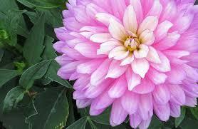 annual and perennial flowers for north dakota u2014 publications