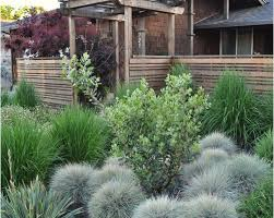 ornamental grasses are low maintenance require watering